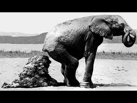 Hewan-hewan besar BAB, jangan lihat sambil makan!