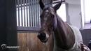 Equanimity - Spokojny, opanowany i zrównoważony koń