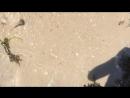 ковш стирается с лица песка