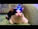 Кот не хочет отвечать Смешные животные