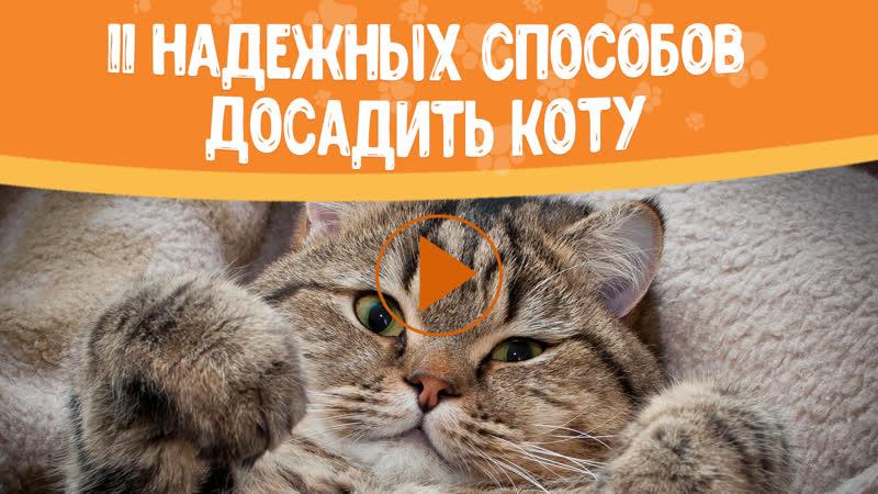 11 надежных способов досадить коту (online-video-cutter.com)