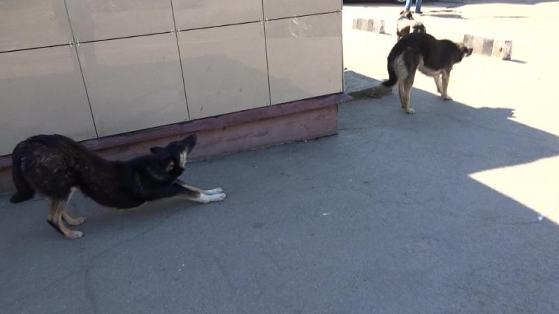 Три собаки на плешке на которых провокаторы организовали кампанию жалоб во все инстанции видео 2