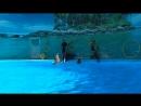 Дельфинарий Немо в Алуште, шоу с дельфинами