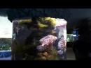 Большой аквариум, акула 2
