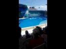 дельфины тогда сделали наш день!