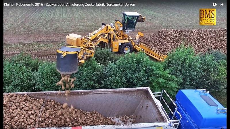 Rübenernte - Rübenmaus - Zuckerrübenverladung -Zuckerfabrik Nordzucker Uelzen-beet loader