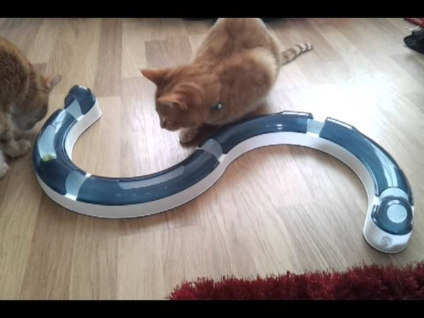 Our cats playing with catit senses play circuit toy