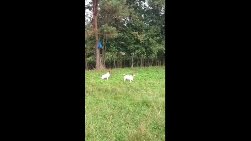 Лора и Марфа юные пастухи 😂