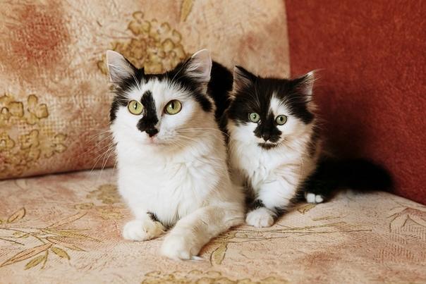 #нужна_финансовая_помощь@vmestepnz_animals #Нюша_и_Леся_ID51