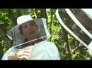 Science vie Le miel et les abeilles, plus quun métier, une passion