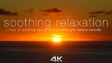 Soothing Relaxation 1HR of 4K Nature Scenes + Music with Harp, Flute, Strings for Relaxation