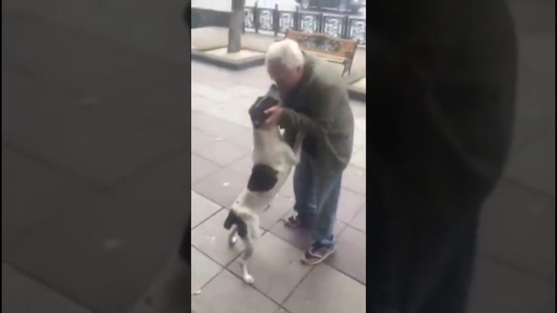 ქუჩაში 3 წლის წინ დაკარგული ძაღლი იპოვა ! ემ4