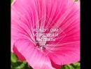 цветы-прекрасные созданья