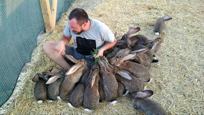 Мы открыли Парк Кроликов.Крым.