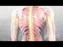 Анатомия человека своими глазами fyfnjvbz xtkjdtrf cdjbvb ukfpfvb
