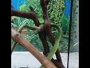 Линька травяного ужа
