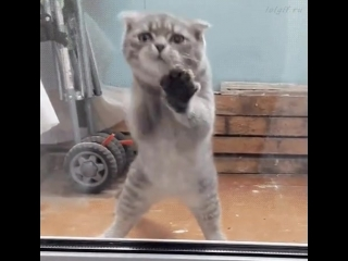 Танцующий кот