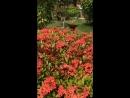 Мальдивы, сад для Ларисы🧚🏽♀️