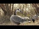 Список зимующих водоплавающих птиц составляют на Кубани
