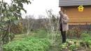 Обрезка и формирование плодовых деревьев FORUMHOUSE