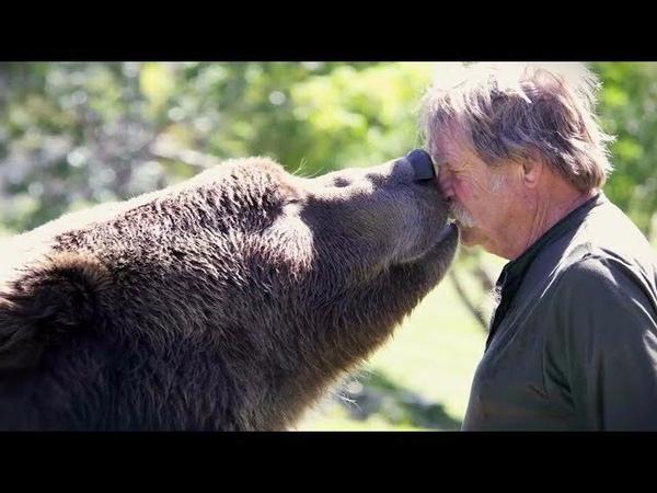 Человек и животные Истории удивительной любви