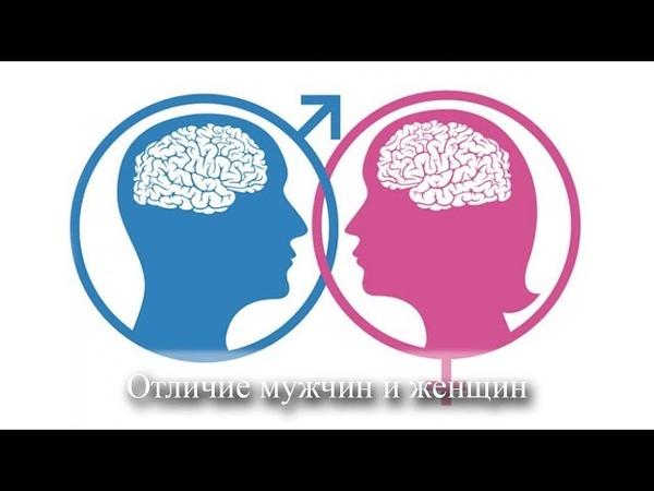 Отличие мужчины и женщины на энергетическом уровне. Чем мужчины отличаются от женщин? Киев 12.05.18