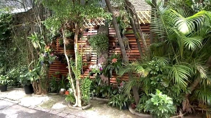 Muro verde é maneira simples de montar um jardim vertical em local sem espaço 83