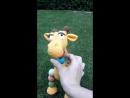 Радужного жирафика МК Татьяна Фаттахова id188111243