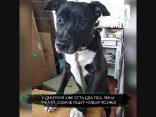 Прохожий спас пса, которого выгнали в наморднике