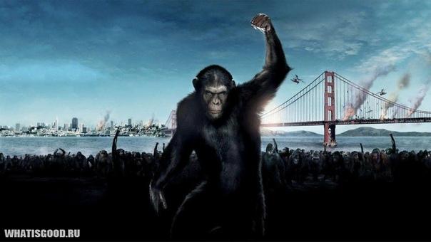 Планета обезьян: Как цивилизованный мир смотрит на остальных