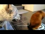 кошка вместе с пылесосом являют собой в мощную моторизованную боевую единицу