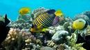 Подводный мир Макади Красное море Египет Underwater World of Makadi Egipt 2015 4K