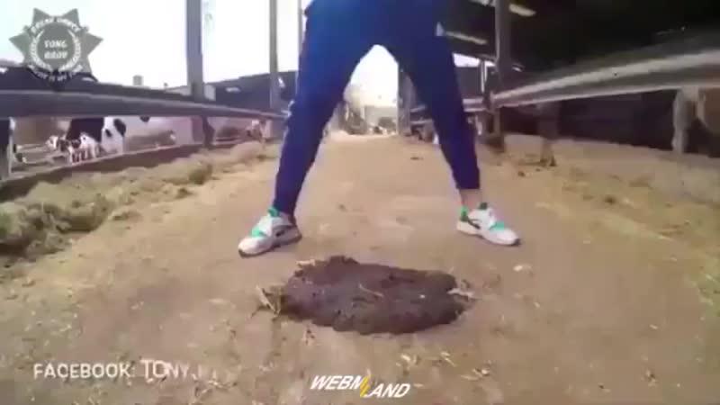 Дуб танцует