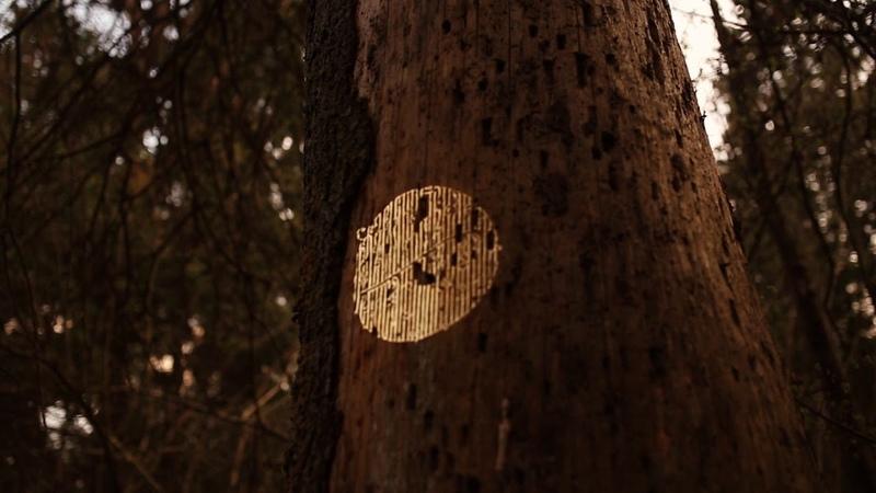 Forest Cyrillic. Teaser