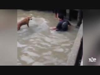 Герои реальной жизни - люди спасают животных, оказавшихся в беде