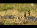 Дикая природа Африки-Виртуальная поездка в Трансграничный Парк Кгалагади, Южная Африка