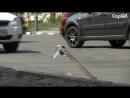 Яму на дороге обозначили лентой цветов российского флага