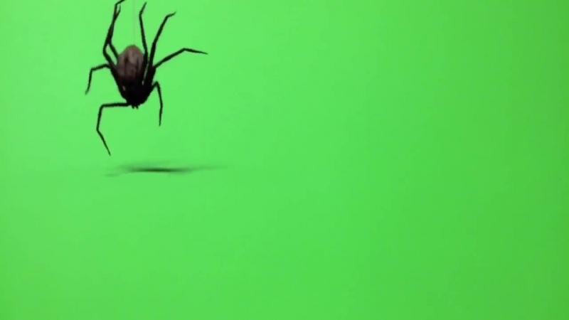 Паук футаж green screen скачать (1).mp4