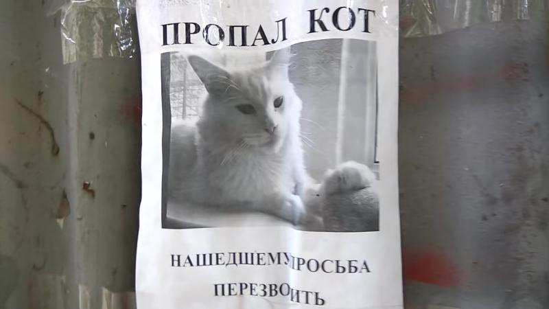 следящий кот