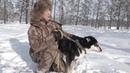 Якутская охотничья лайка. Интервью Николая Гоголева