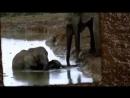 Спасение слонёнка