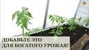 Добавьте это при высадке томатов для богатого урожая!