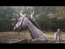 Vee vs Donkey