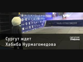 Сургут ждет Хабиба Нурмагомедова