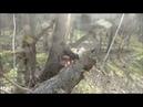 Апрельская прогулка в лес на Северском Донце