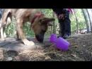 Развивающие игры для собак. Игра со стаканчиками.