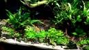 - Nowa lampka - Aquael leddy slim plant