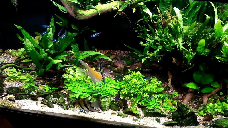 Nowa lampka Aquael leddy slim plant