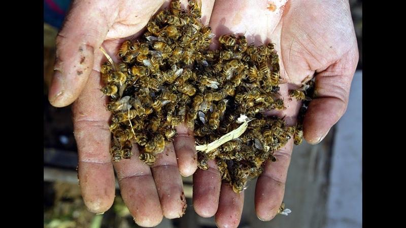 В киквидзенском районе травят людей и пчёл