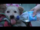 Спецоперация по спасению щенка, упавшего 3 месяца в канализацию